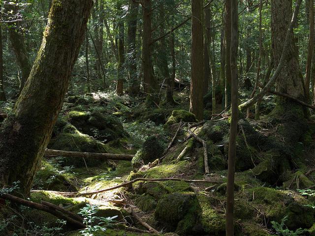 Img2_elminium_Sea of forest_Yamanashi