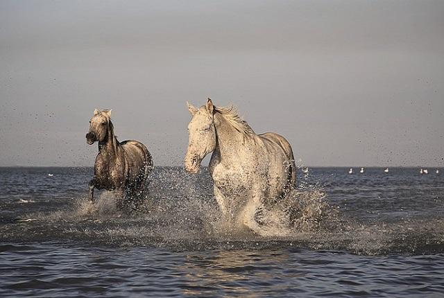 horse-1993174_640