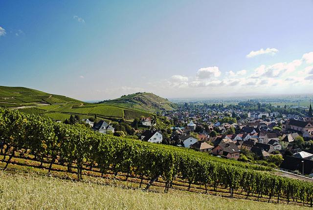 Vin_Alsace_Likibu