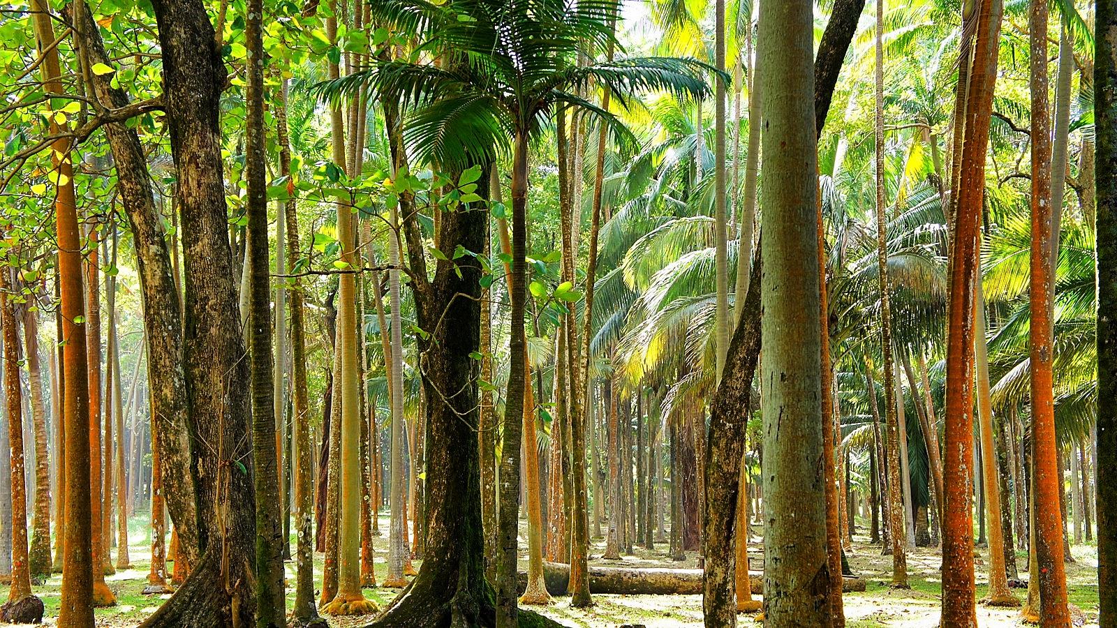 Que faire et voir sur l'île de la Réunion