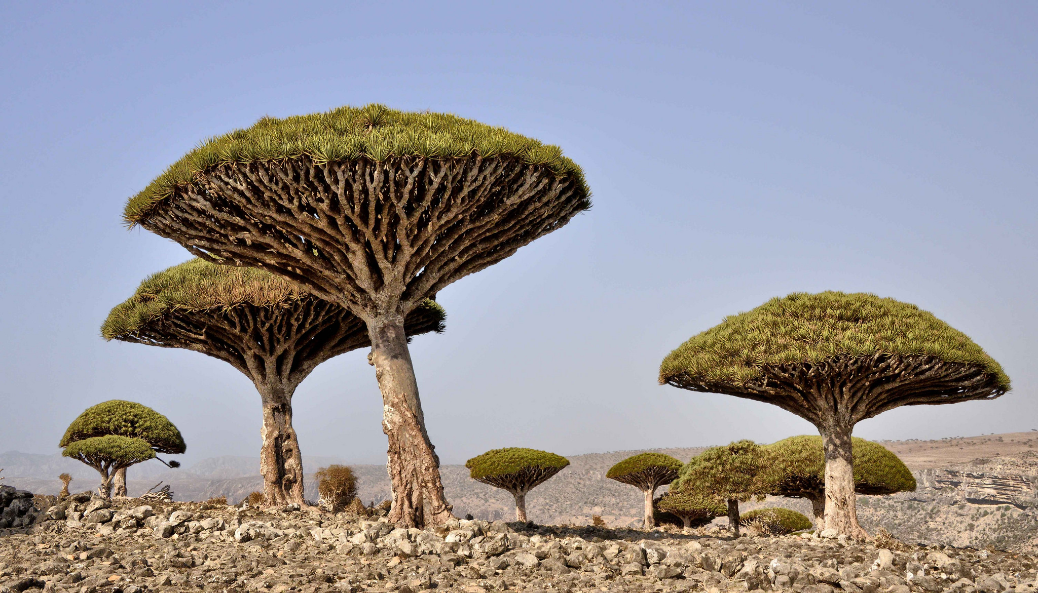 Socotra2_Rod_Waddington